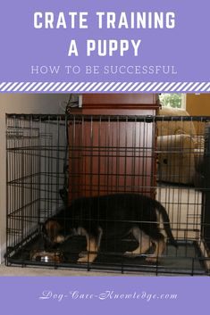 Try these tips when crate training a puppy and you will successfully train your puppy not to use your home as a bathroom or engage in destructive behavior when you're out. #dogtrainingnearme