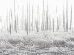 Hiver blanc dans le Yellowstone