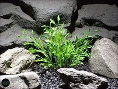aquarium or reptile enclosure plant: thyme bush | parp051 plstc.| ron beck designs  www.ronbeckdesigns.com  #ron_beck_designs #aquarium
