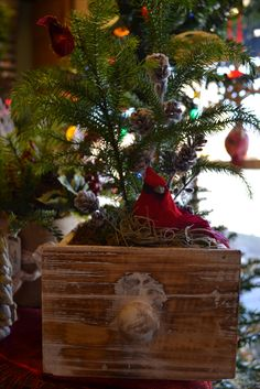 norfolk pine in a wooden drawer.