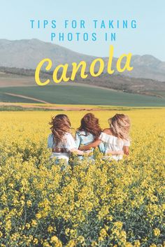 tips for taking photos in canola