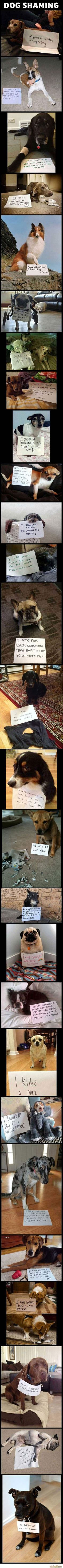 The ultimate dog shaming compilation