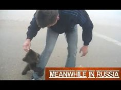Cutest Grizzly Bear Attack Ever!