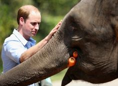 Prince William: China Day 4: in Xishuangbanna Elephant Reserve met Prince William the rescued elephants Ran Ran who can appreciate brought carrots and some cuddles.
