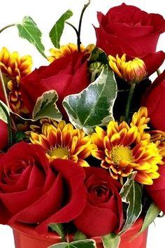 Beautiful Flowers, Plants, Flowers, Plant, Planets