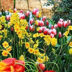 Garden Ideas & Projects - The Home Depot Garden Bulbs, Planting Bulbs, Garden Pots, Planting Flowers, Home Grown Vegetables, Growing Vegetables, Soil Texture, Spring Flowering Bulbs, Soil Improvement