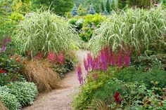 A Striking Border with Astilbes and Grasses