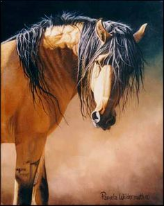 buckskin mustang- Pamela Wildermuth~~ I love the Kiger's and if anyone ever see's a photo of Musitino...You'll be in Awe Too