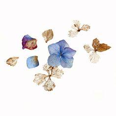 5_Carolyn-Jenkins-Folio-Art-Illustration-Botanical-Nature-Flower-Watercolour-Gouache-Hydrangea-petals-L.jpg 900×900 ピクセル
