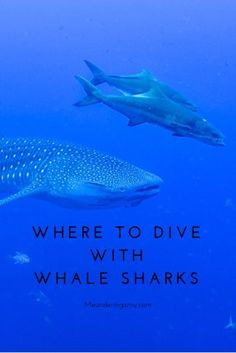 Whale sharks, where to find whale sharks, opt outside, #diving