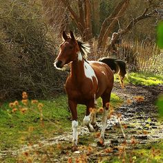 """A horse is the projection of peoples' dreams about themselves - strong, powerful, beautiful - and it has the capability of giving us escape from our mundane existence.""  ~Pam Brown"