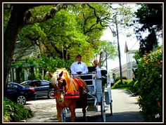 Carriage Ride at Southport