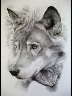Wolf drawing. Credit to drawer. Awesome work by the way!