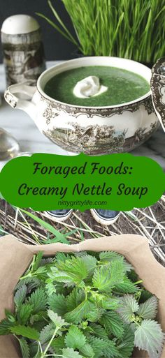 Stinging nettle is a highly valued medicinal and nutritional forage. This delicious creamy nettle soup perfect way to entice a reluctant diner to eat foraged foods! #stingingnettle #nettlesoup #foragedfoodrecipe via @nittygrittylife