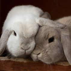 I just love rabbits so much…