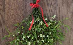 Have leftover mistletoe after the holidays? Don't toss it! Use it for its health & beauty benefits.  via Care2.com