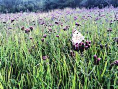 Beautiful butterfly in a field