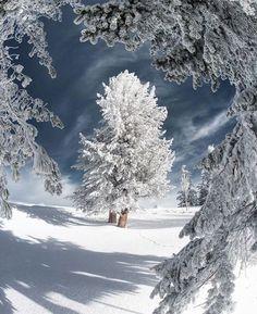 Winter Szenen, Winter Magic, Winter Trees, Winter Christmas, Christmas Lights, Framing Photography, Canon Photography, Winter Photography, Nature Photography
