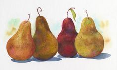 Jake Marshall watercolor. Four pears in a row, with pastel applied.