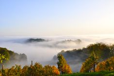 suedsteirische weinstrasse foto 08 Fotografie • We live in the Sky... Nebelschwaden an der Südsteirischen Weinstraße