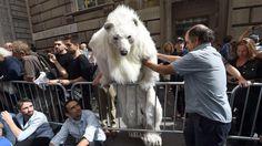 """Manifestantes, durante la marcha """"Flood Wall Street""""La Cumbre del Clima reune en Nueva York a más de un centenar de gobernantes de todo el mundo convocados por el secretario general de la ONU, Ban Ki-moon, para acelerar la toma de decisiones que permitan reducir las emisiones contaminantes. (AFP)"""