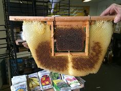 Eco Bee Box - Albert Chubak presentations      Presentations    The presentation on Splits and Queen Rearing.     Wyoming Bee College 20...