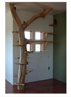 Gato tree
