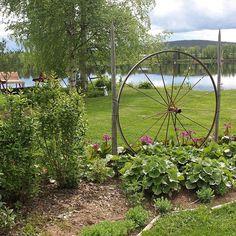Ihanan vihreää jo #bloginpäivitys #kesäkuu#pihalla#lämminkesäsää Garden, Plants