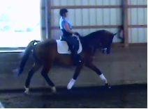Gulf Storm | Dressage Horses For Sale | DressageMarket.com