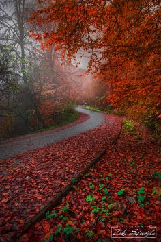 Fall Of The Leaves by Zeki Seferoglu on 500px