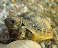 """Résultat de recherche d'images pour """"tortue de terre"""""""