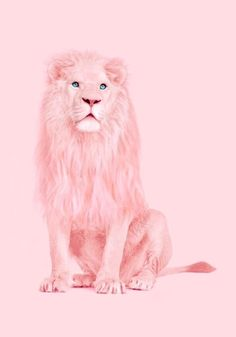 Albino Lion Print by Paul Fuentes Pink Love, Pretty In Pink, Paul Fuentes, Pop Art, Tout Rose, Lion Print, Arte Pop, Everything Pink, Albino