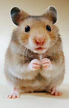 Z Book, Funny Captions, Cute Animal Pictures, Writing A Book, Guinea Pigs, Hamsters, Chinchillas, Cute Animals, Humor