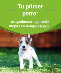 Tu primer perro: te ayudamos a que todo mejore en tiempo récord  ¿Tu primer perro...? en este artículo compartimos algunos tips para que sepas cómo educarlo y que mejore su conducta en poco tiempo. #mascota #adiestramiento #caninos #tips
