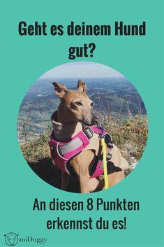 Du bist dir nicht sicher ob es deinem Hund gut geht? An diesen 8 Punkten erkennst du es!