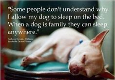 All my animals sleep with me!