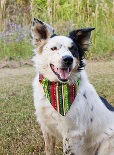 Dog Christmas Gift, Dog Stocking Filler, Etsy Listing, Xmas Dog ...