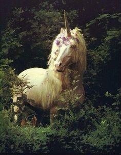 Unicorn in forest Unicorn And Fairies, Unicorn Fantasy, Unicorns And Mermaids, Unicorn Art, Magical Unicorn, Unicorn Drawing, Unicorn Crafts, Rainbow Unicorn, Unicorn Images
