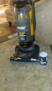 Use salt to dehydrate and kill fleas in carpet and furniture.  Leave a few hours to overnight.  Vaccum.