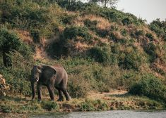 Boat safari on the Kazinga Channel is a must-do in Uganda's Queen Elizabeth National Park. #safari #africa #uganda #elephant Gorilla Trekking, Uganda Travel, List Of Activities, Paradise Found, Photo Location, Queen Elizabeth, Travel Guides, Safari, National Parks