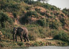 Boat safari on the Kazinga Channel is a must-do in Uganda's Queen Elizabeth National Park. #safari #africa #uganda #elephant