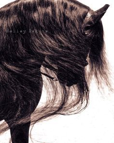 Picture by Kelley Da Picture by Kelley Dakota. 'Black Mane'