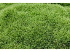 plus de 1000 id es propos de les jardins de ma couvre sols ground covers sur pinterest. Black Bedroom Furniture Sets. Home Design Ideas