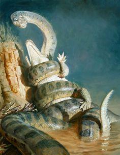 Titanoboa Cerrejonensis est un serpent fossile disparu lors du Paléocène (58 à 60 millions d'années). Taille: Entre 11 et 15 mètres. / Poids: Entre 730 kg et 2000 kg.