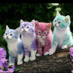 You all know how I love my pets to match my colors!!!  It's inherent!