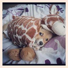 Giraffe Corgi