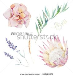 Watercolor flowers set. Hand painted purple leaves, pink flowers: rose, lavender, protea flower, herbs and leaves branch isolated on white background. Floral artistic collection  - stock photo