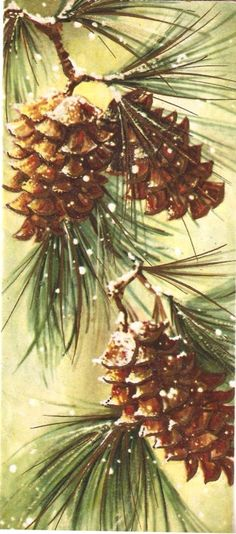 Vintage Pinecone Christmas Card.                                                                                                                                                                                 More