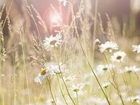 1000+ images about Sunshine on Pinterest | Dekoration, Fairies and Romances