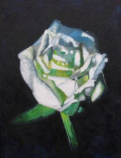white rose by ~pavalo on deviantART